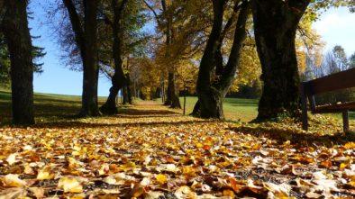 moravský podzim