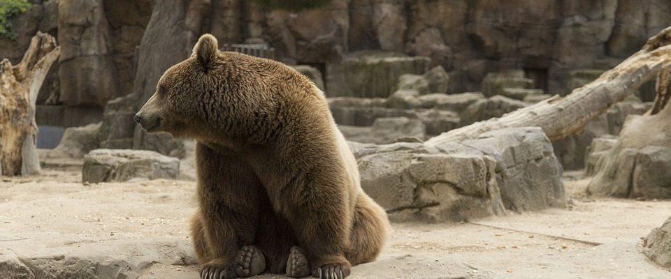 Adopce zvířat ze zoo