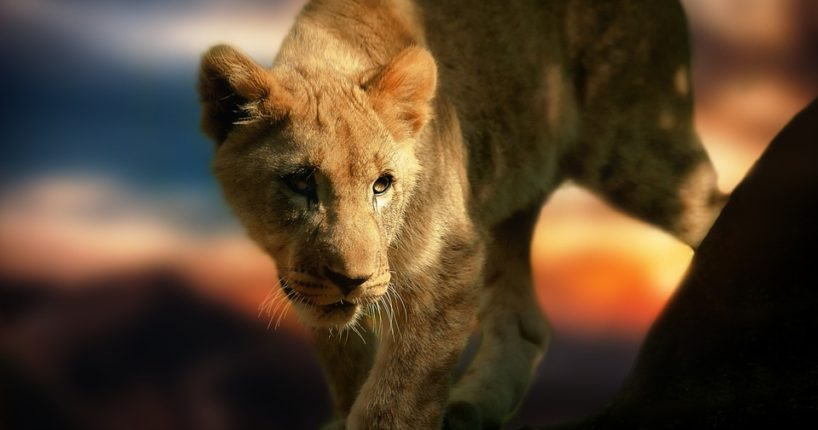 Lvíčata jako největší lákadlo brněnské zoo