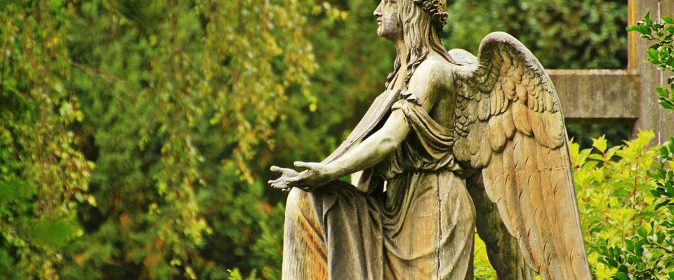 Obnova zeleně. To čeká Ústřední brněnský hřbitov