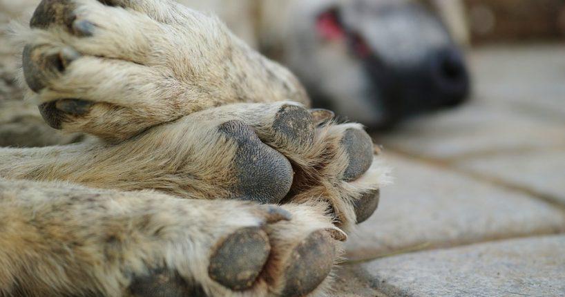 V noclehárnách letos našli útočiště i lidé se psy